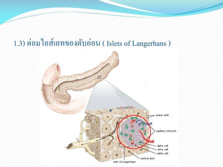 1.3) ต่อมไอส์เลทของตับอ่อน (