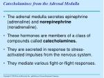 catecholamines from the adrenal medulla