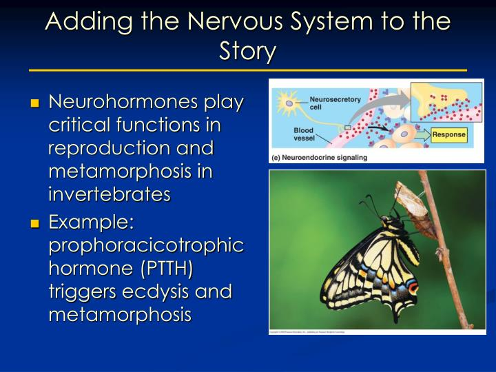 Adding the Nervous System to the Story
