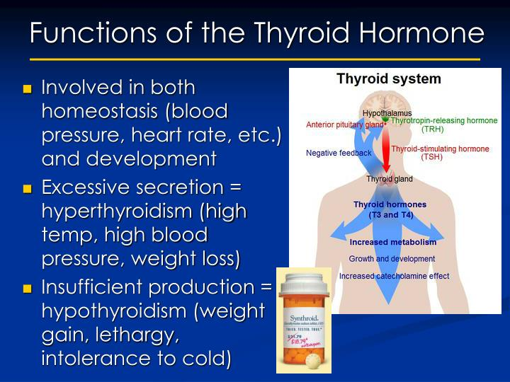 Functions of the Thyroid Hormone