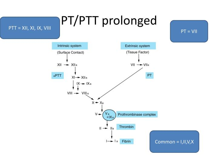 PT/PTT prolonged