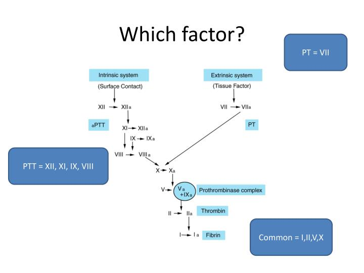 Which factor?