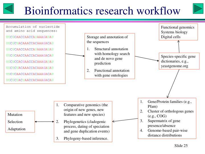 Bioinformatics research workflow