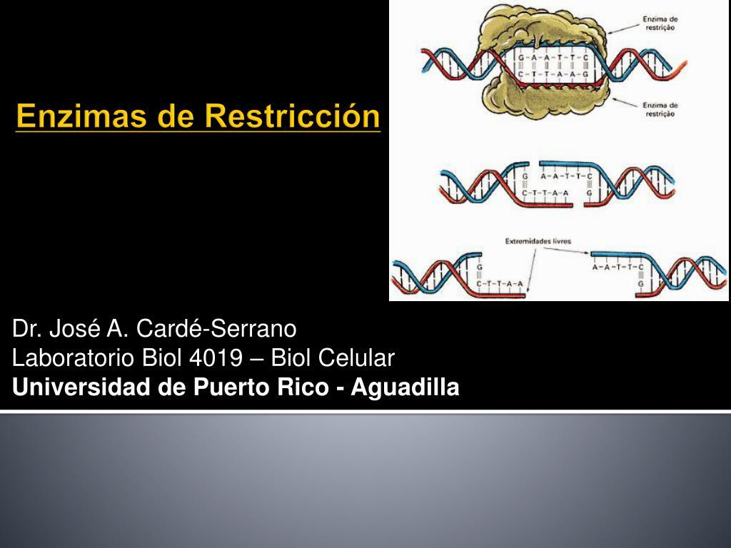 Enzimas De Restriccion Download