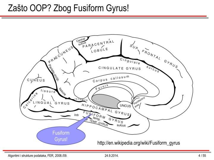 Zašto OOP? Zbog Fusiform Gyrus!