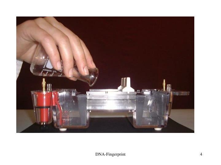 DNA-Fingerprint