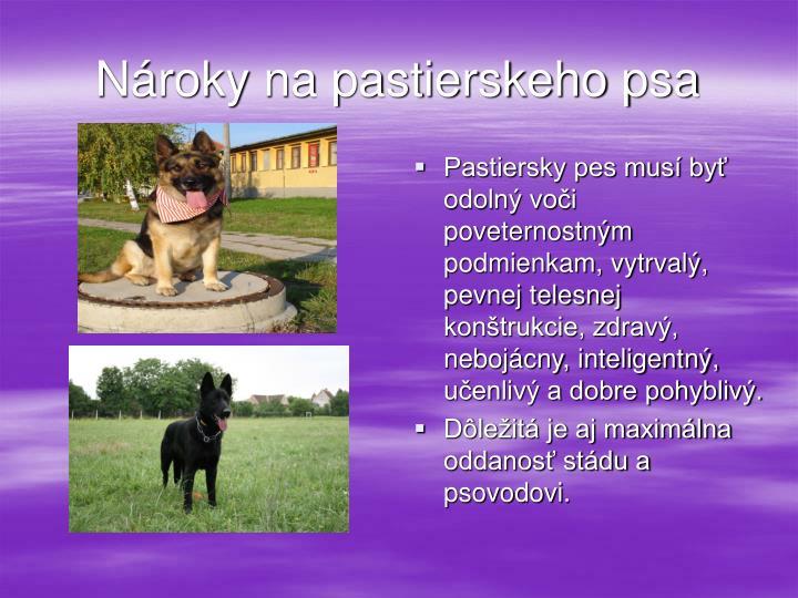 Nároky na pastierskeho psa