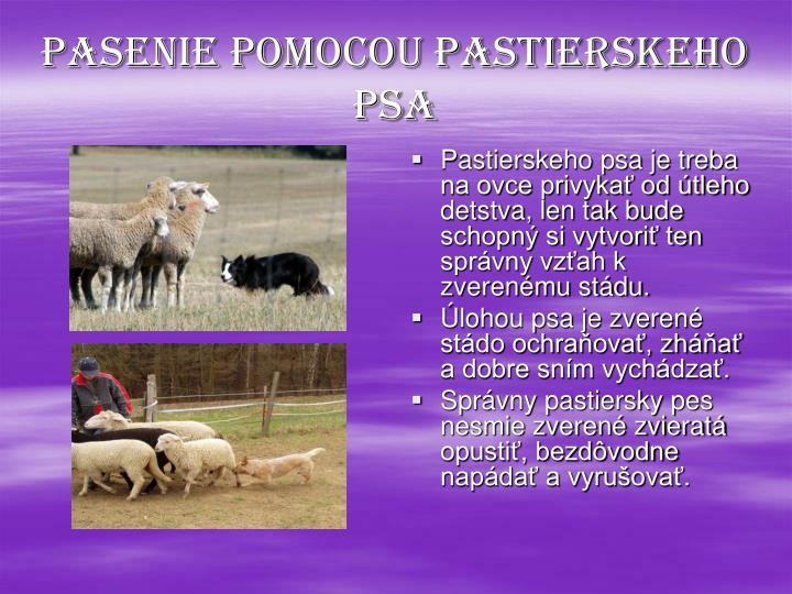 Pasenie pomocou pastierskeho psa