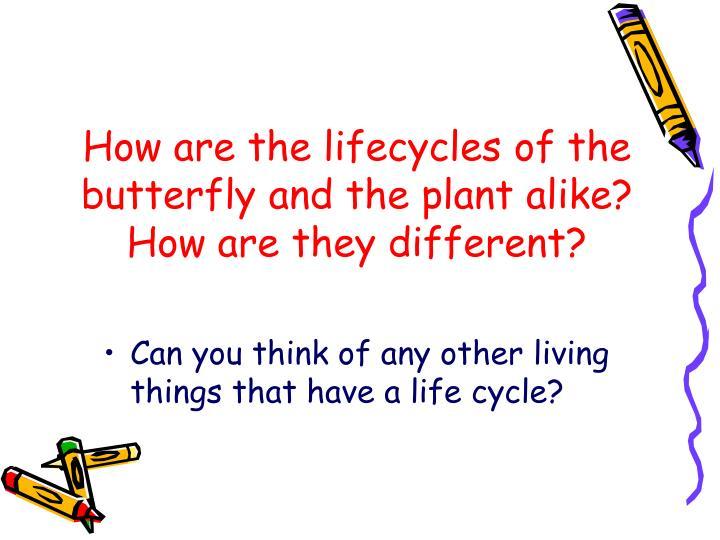 How are the lifecycles of the butterfly and the plant alike?  How are they different?