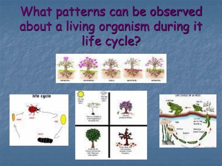 What patterns can be observed about a living organism during it life cycle