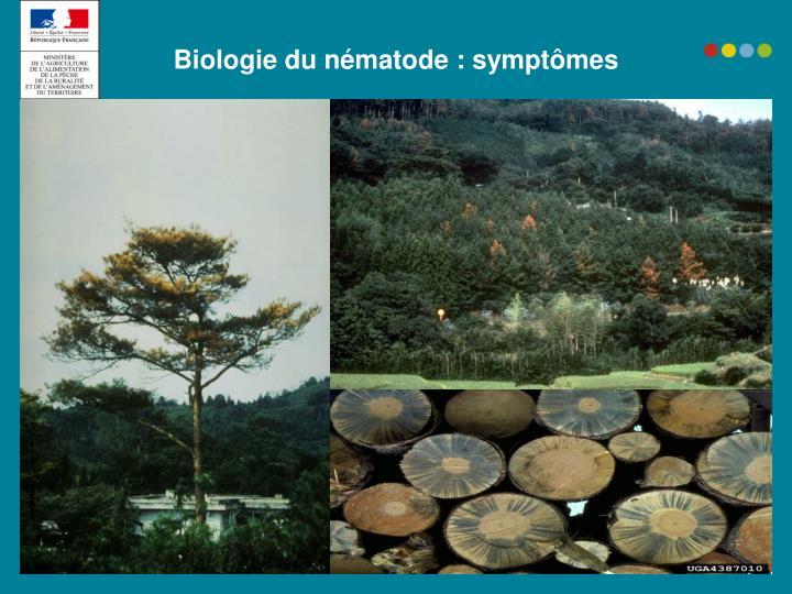 Biologie du nématode : symptômes