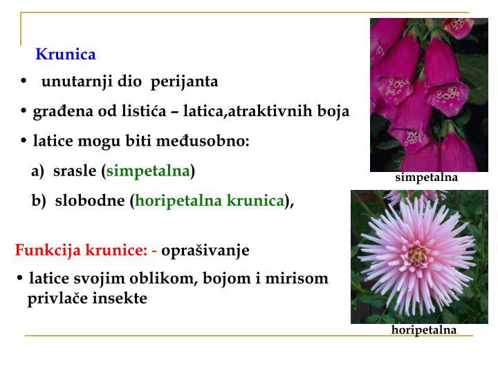 Krunica