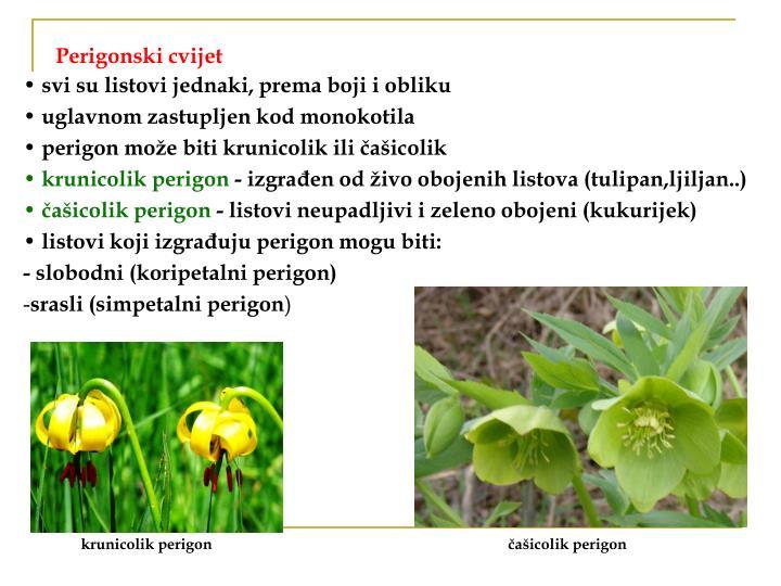Perigonski cvijet