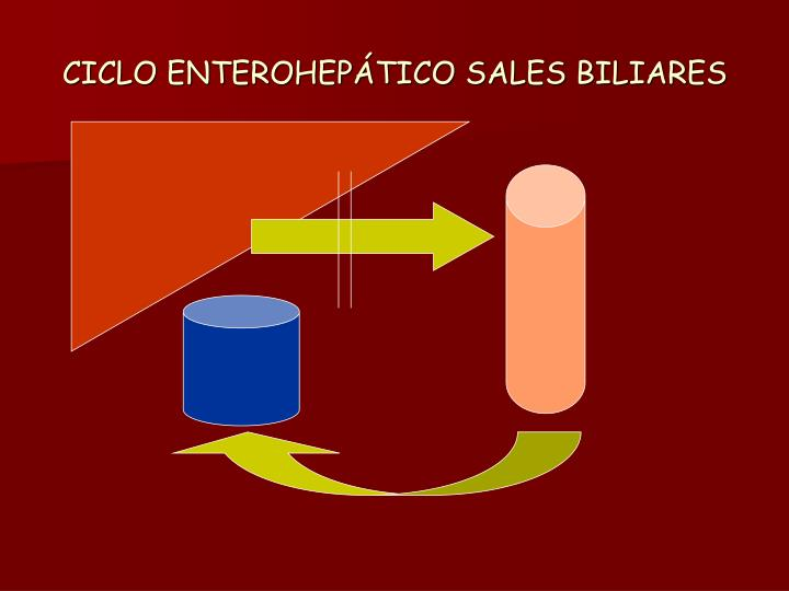 CICLO ENTEROHEPÁTICO SALES BILIARES