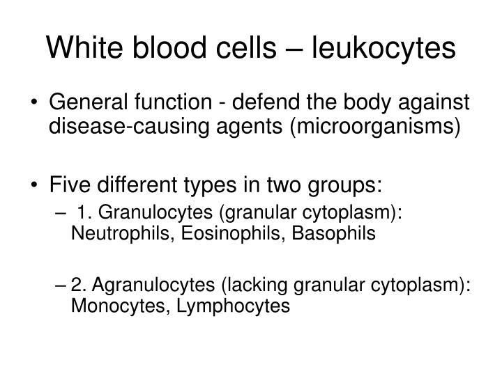 White blood cells – leukocytes