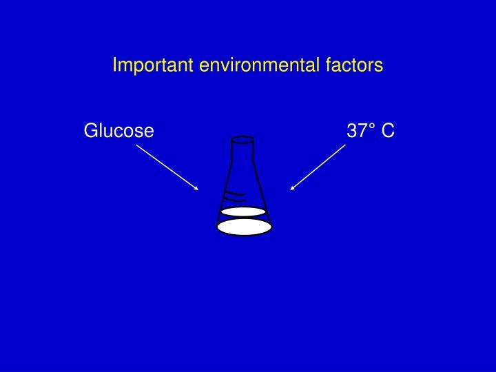 Important environmental factors