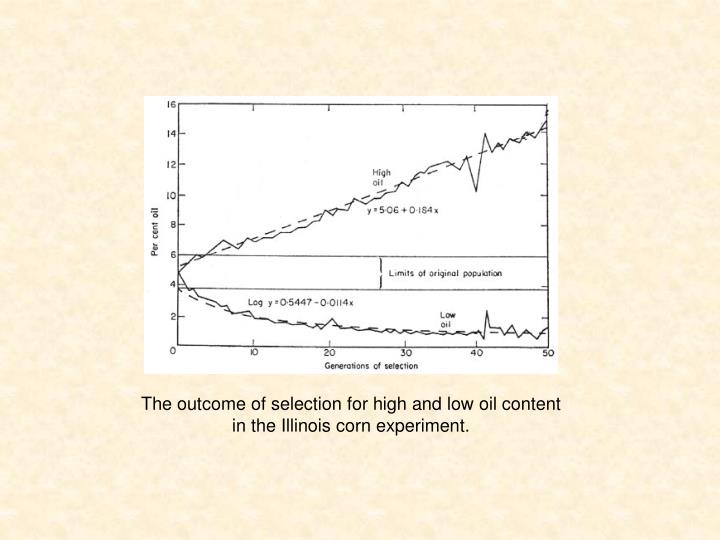 The outcome of selection for high and low oil content