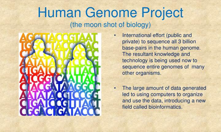 the international effort on human genome project This information is published and is accessible through genome database at johns hopkins university (mckusick 1991) the most recent human genome mapping workshop was held in august 1991, at which the human genome organization (hugo) began to assume increased responsibility for coordination of the international mapping.