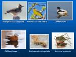 c lifarul ro u scolopendra cingulata cosa ul endemic