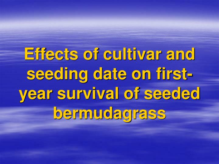Effects of cultivar and seeding date on first-year survival of seeded bermudagrass