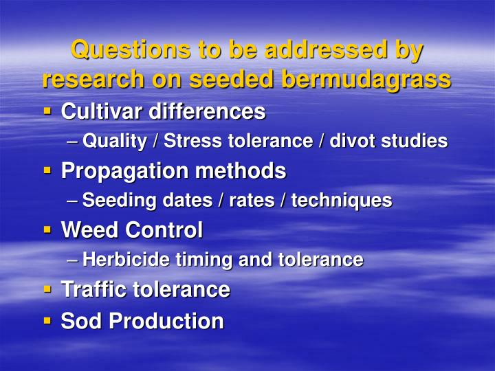 Questions to be addressed by research on seeded bermudagrass