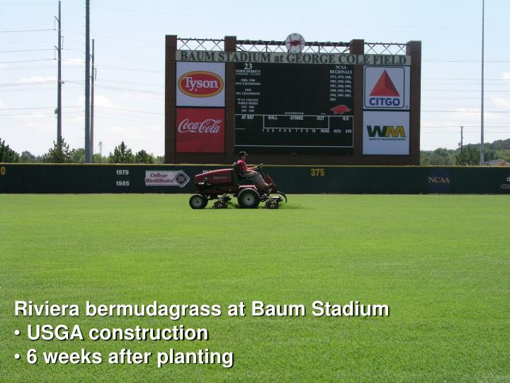 Riviera bermudagrass at Baum Stadium