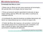 microbiota bacteriana