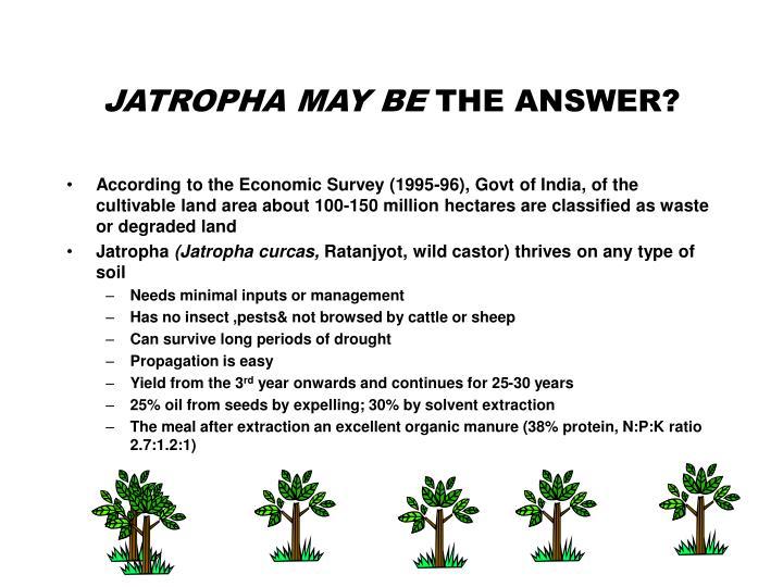 JATROPHA MAY BE