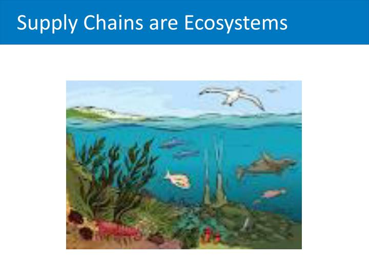 Supply Chains are Ecosystems