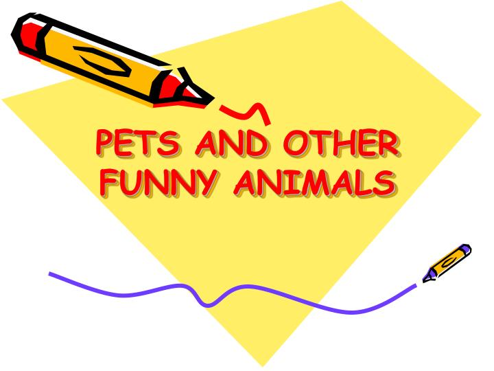 pets and other funny animals n.