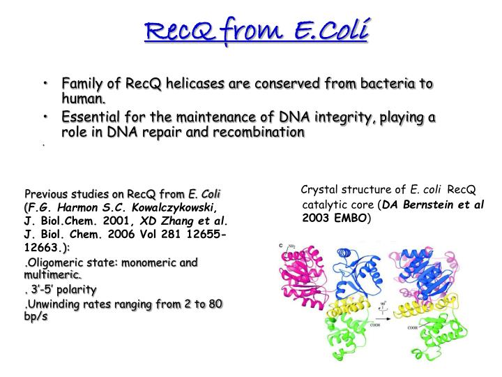 RecQ from