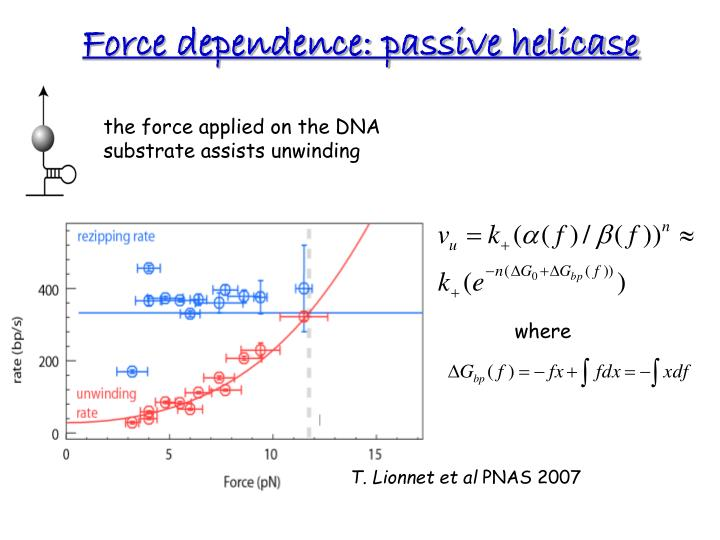 Force dependence: passive helicase