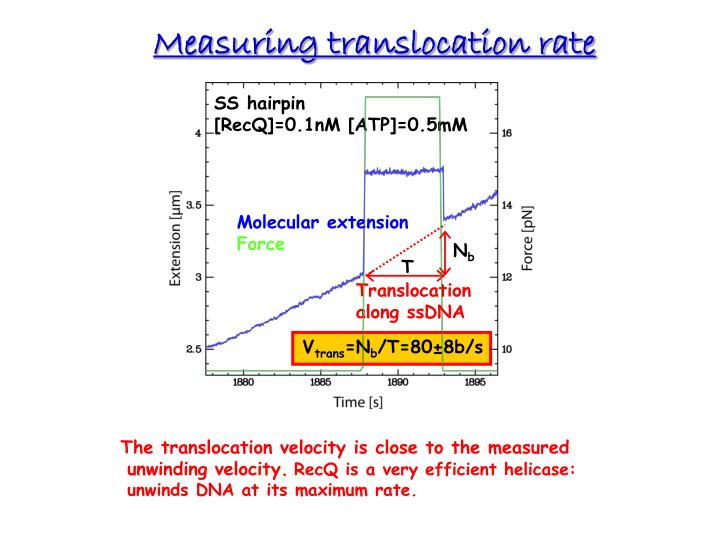 Measuring translocation rate