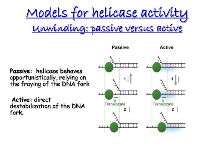 Models for helicase activity