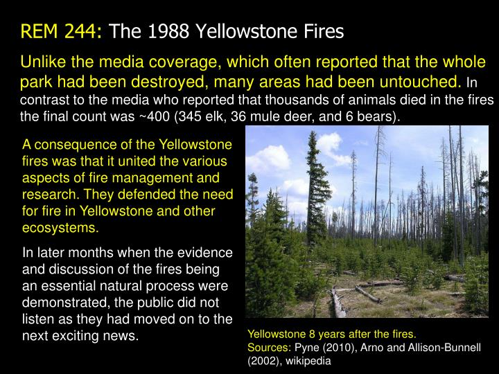 Unlike the media coverage, which often reported that the whole park had been destroyed, many areas had been untouched.