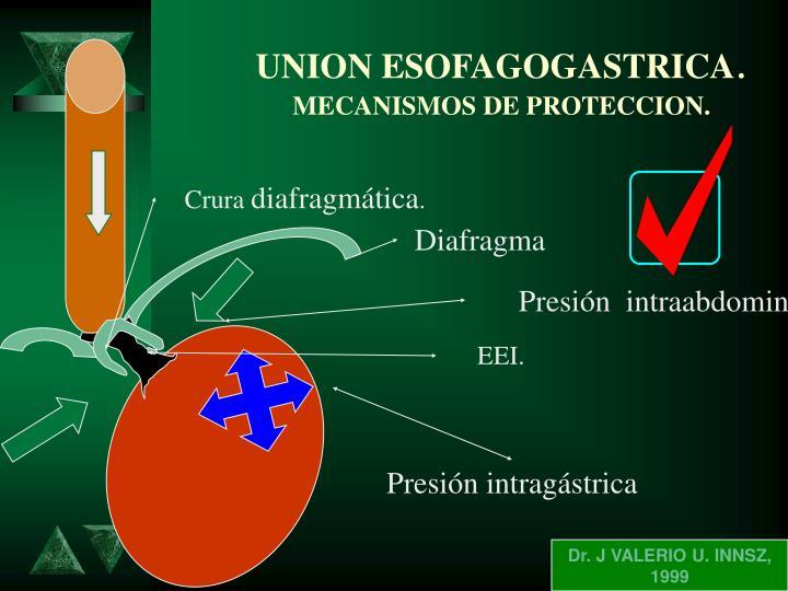 UNION ESOFAGOGASTRICA