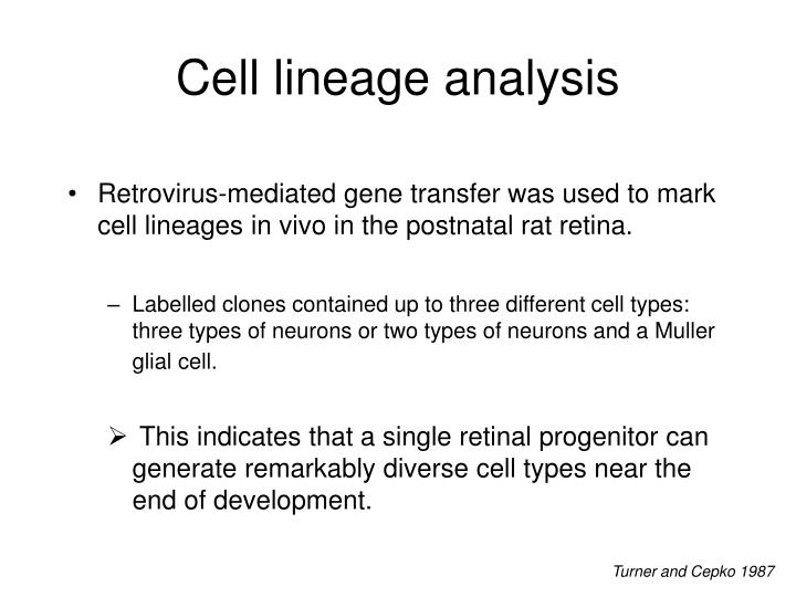 Cell lineage analysis