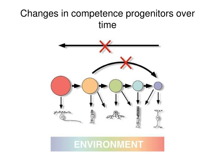 Changes in competence progenitors over time
