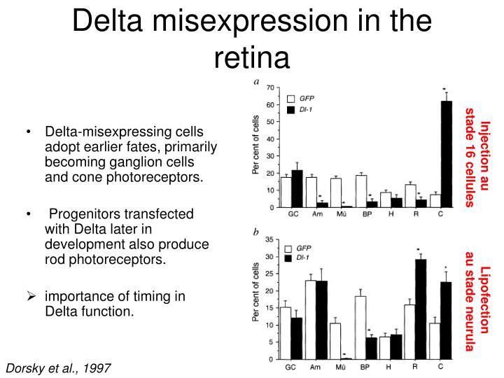 Delta misexpression in the retina