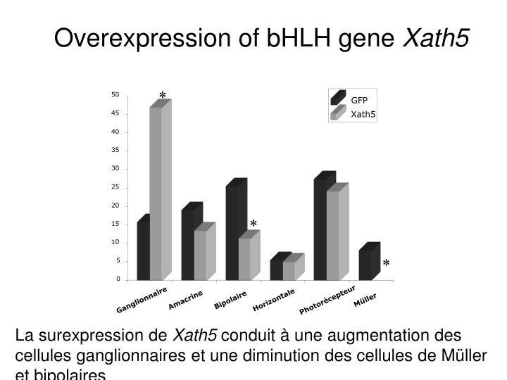 Overexpression of bHLH gene
