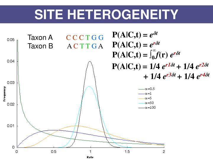 SITE HETEROGENEITY