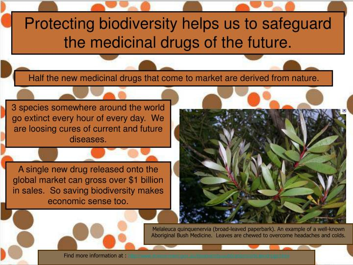 Protecting biodiversity helps us to safeguard the medicinal drugs of the future.