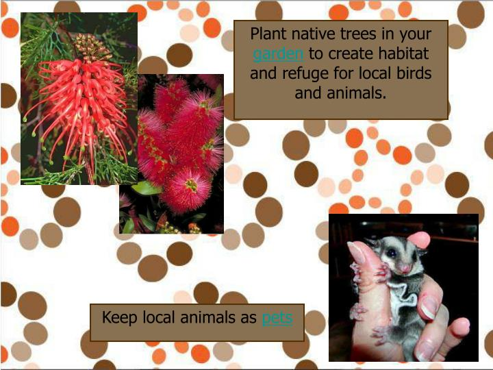 Plant native trees in your