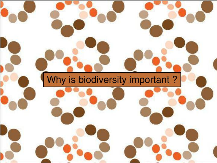 Why is biodiversity important ?