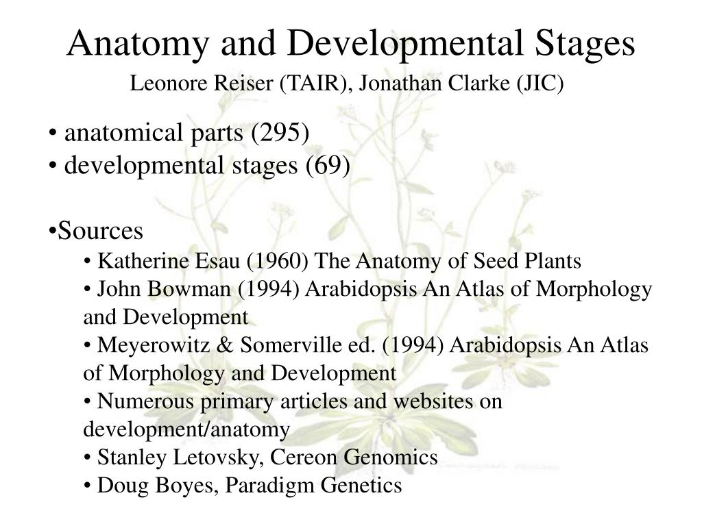 Arabidopsis: An Atlas of Morphology and Development