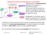 cip kip proteins and apoptosis cell death