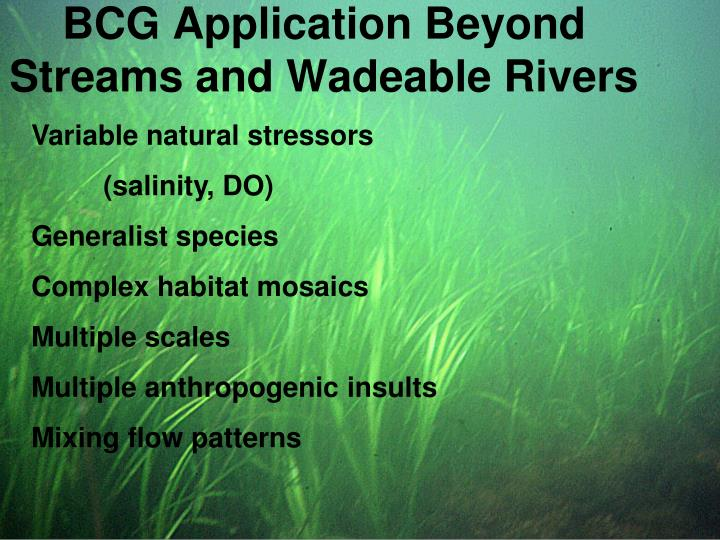 BCG Application Beyond Streams and Wadeable Rivers