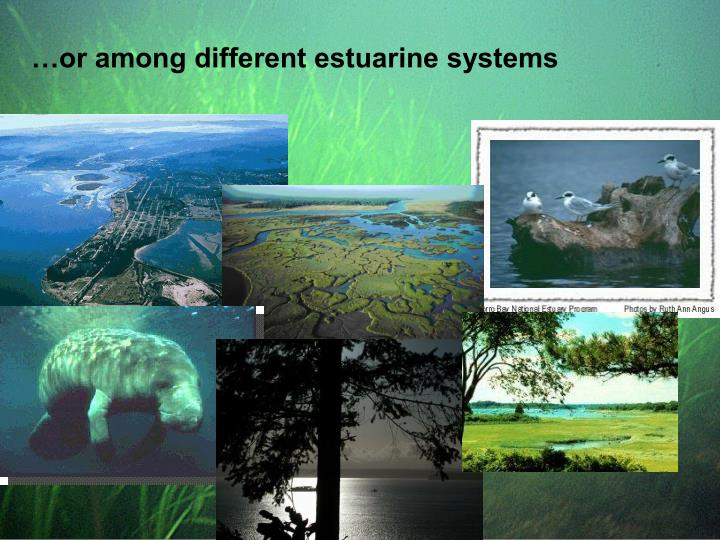 …or among different estuarine systems