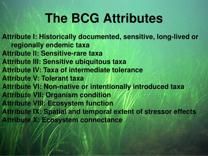 The BCG Attributes