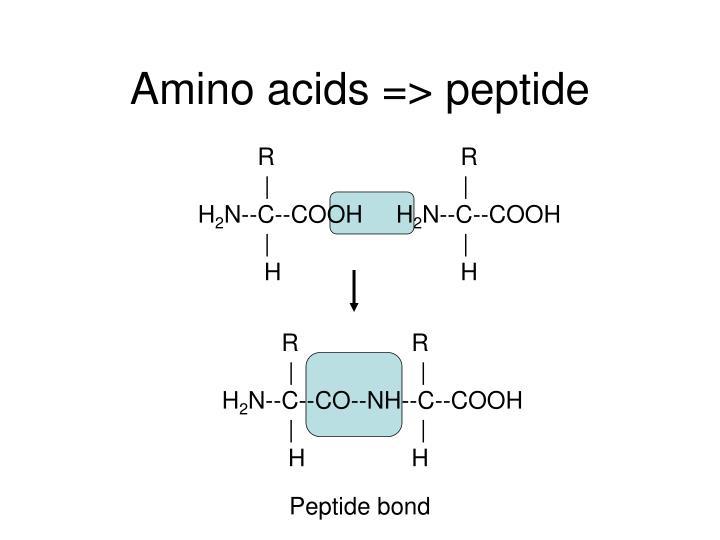 Amino acids => peptide